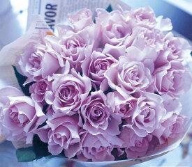 【予約大苗】バラ苗 ミスティパープル (FL紫) 国産苗 6号鉢植え品《TK-TK》 ※2月末までにお届け