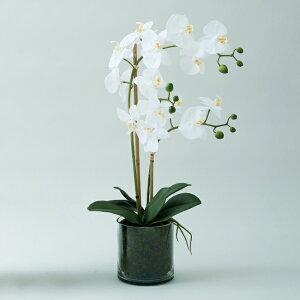 【造花】【フェイクグリーン】 オーキッド ファレノプシス ポット 55(ガラスポット付) 【インテリア 観葉植物 人工植物 おしゃれ ラン 鉢植え セール対象F】