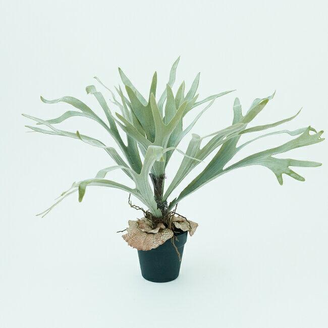 【造花】【フェイクグリーン】 ビカクシダ ポット 58【インテリア 観葉植物 人工植物 おしゃれ イミテーション 鉢付き】