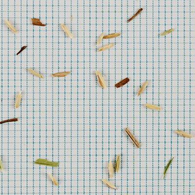 暑さ、病気に強い!寒冷地から暖地までの広域適応性寒地型芝の種