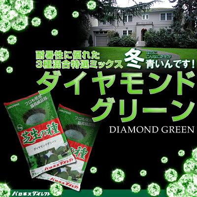 【耐暑性に優れた特選ミックス】ダイヤモンドグリーン1kg入り