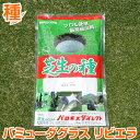 【期間限定セール】バミューダグラス リビエラ 1kg お庭の広さ12〜18坪用 バロネス暖地型 芝生の種 多年草 発芽適温摂…
