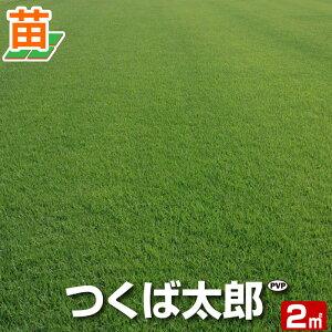 【10月9日〜のお届け】【産地直送】つくば産 つくば太郎 野芝 登録品種 2平米 0.6坪分 芝生 暖地型 天然芝 園芸