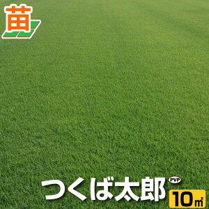 【10月9日〜のお届け】【産地直送】つくば産 つくば太郎 野芝 登録品種 10平米 3坪分 芝生 暖地型 天然芝 園芸
