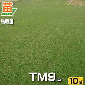 【お届けまでに約3週間かかります】【産地直送】鳥取産TM9(ティーエムナイン)10平米(3坪分)(張り芝用) プレミアム苗 芝生 暖地型 省管理型高麗芝 天然芝 園芸