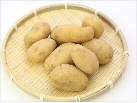 たねがじゃが 10kg 【有機JAS】 鹿児島県 種子島産 新じゃがいも2020年1月10日から出荷開始予定