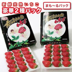 いちご ギフト 贈答用いちご2種セット 大粒 イチゴ ストロベリー 贈答 豪華 新鮮 苺農家 深作農園