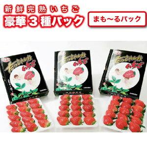 いちご ギフト 贈答用いちご3種セット 大粒 イチゴ ストロベリー 贈答 豪華 新鮮 苺農家 深作農園