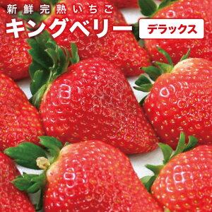 いちご ギフト キングベリー デラックス 大粒 イチゴ ストロベリー 高級 苺農園 深作農園