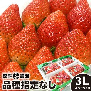 いちご ギフト 品種指定なし 3L×4パック イチゴ 大粒 贈答 ストロベリー 新鮮 苺農家 深作農園