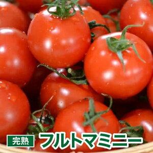トマト フルトマミニー 1.5kg ギフト プチギフト トマトジュース にも 最適 食塩無添加
