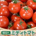 トマト 高糖度 フルーツトマト「朝採れミディトマト」1.5kg 有機野菜 有機農産物 プチギフト 美味しさに 訳あり トマトジュースにも最適なフルーツトマト