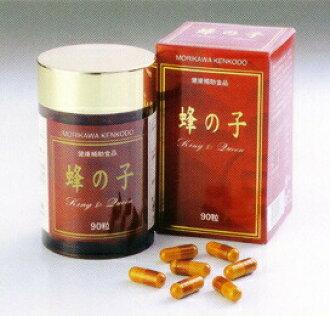 ★ 90 Morikawa health temple larvae of a wasp