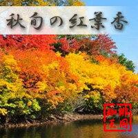 【送料無料】【今月のサービス豆】3種&季節限定セット(K,S,E)