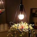 照明 LED 1灯 ペンダントライト ジェリコ フェイクグリーン セット|照明器具 間接照明 天井照明 テラリウム トイレ 内…
