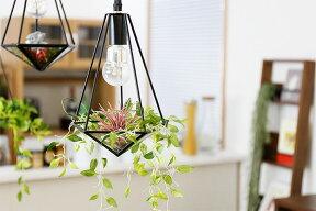いなざうるす屋さんのフェイクグリーン「ティランジアボルドー」と「垂れる葉っぱS」を飾った消灯イメージ