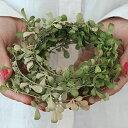 【いなざうるす屋】フェイクグリーン 落ち葉ガーランド【いなざうるす グリーン 緑 葉 葉っぱ 落ち葉 フェイク ガーラ…