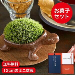 かめ盆栽 モロゾフ お菓子 ギフト セット【包装不可・...