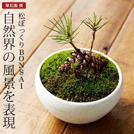 まつぼっくり 盆栽(ミニ盆栽 bonsai ボンサイ) 翠松園 撰【包装不可・のし不可 ご了承ください。】/ギフト お祝い 内祝い お礼 お返し 誕生日 快気祝い