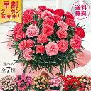 母の日 2021 早割 ギフト ランキング プレゼント カーネーション 花鉢 鉢植え さくらもなか 5号鉢 ピンク 母の日期間…