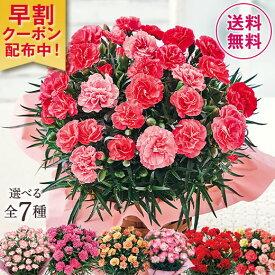 母の日 2021 早割 ギフト ランキング プレゼント カーネーション 花鉢 鉢植え さくらもなか 5号鉢 ピンク 母の日期間お届け 【ギフト対象商品】