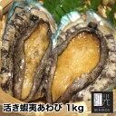 活あわび 1kg L(90/100g)10枚入 1kg あわび 蝦夷あわび アワビ 鮑 活アワビ 活鮑