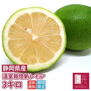 国産レモン 【新物】 温室栽培レモン 秀品 3kg 「沖縄は+1100円」 静岡産 レモン 果物 フルーツ