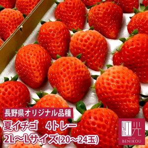 長野産 夏いちご 1.2キロ 2L〜Lサイズ (20〜24粒) 300g×4トレー サマープリンセス サマーリリカル 苺 イチゴ 果物 フルーツ ギフト ストロベリー 業務用