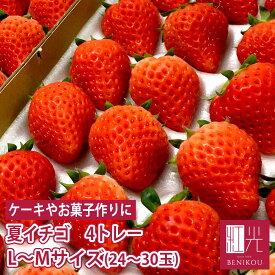 国産 夏いちご 1.2kg L〜Mサイズ (24〜30粒) 300g×4トレー サマープリンセス サマーリリカル すずあかね 紅ほっぺ 苺 イチゴ 果物 フルーツ ギフト ストロベリー 業務用