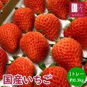 国産いちご 0.3kg 2L〜Mサイズ (20〜30粒) 300g×1トレー サマープリンセス サマーリリカル すずあかね 苺 イチゴ 果…