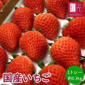 国産いちご 0.3kg 2L〜Mサイズ (20〜30粒) 300g×1トレー サマープリンセス サマーリリカル すずあかね 苺 イチゴ 果物 フルーツ ギフト ストロベリー 業務用