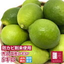 レモン 国産 秀品 5kg ノーワックス 防腐剤不使用 静岡産 国産レ...