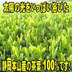 本山茶100%