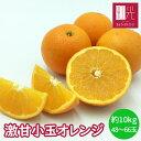 オレンジ 約10kg(48〜66玉) 輸入品 【送料無料】 「北海道・沖縄は+1100円」 果物 フルーツ ネーブル バレンシア 柑…