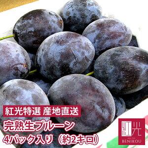 生 プルーン サンプルーン 北海道仁木町山田さんの 完熟 生プルーン 4パック入り (約2kg) (4パックで約60〜80個前後) 果物 フルーツ 鉄分 ギフト 家庭用