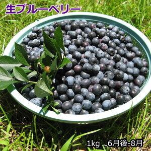 【予約】生ブルーベリー1kg(6-8月)国産、農薬不使用で栽培