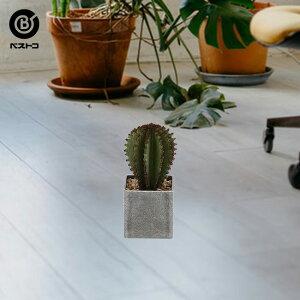フェイクグリーン スクエアポット No3 グレー   観葉植物 卓上 フェイク ミニ 人工観葉植物 造花 サボテン 多肉植物 小さい セメント鉢 インテリアグリーン アーティフィシャルグリーン おし