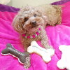 Love Pets Bone Toy Yellow M / Bone Shaped Stuffed Toy for Pets! Squeaks and Crinkles!