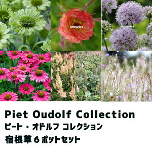 【花苗セット】ピート オドルフ コレクション (6ポットセット) 【Aグループ】 Piet Oudolf Collection