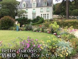 【宿根草セット】Better Gardens 宿根草 7cm ポット セット【Cグループ】