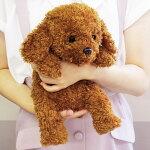 おやすみワンちゃん柴犬のこむぎちゃん撫でたり抱っこしたりおすわりしたり可愛く鳴いて癒される