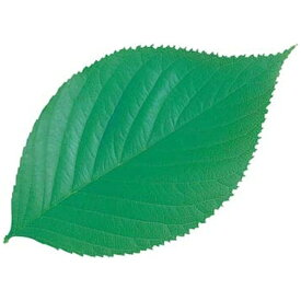 ヤマコー YAMACO 型抜きクリアシート(200枚入) 65787 木の葉 <QKL1902>[QKL1902]