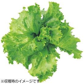 ユーイング UING 水耕栽培種子 レタス(グレートレイクス) 「GreenFarm」 UH-LA01[UHLA01]