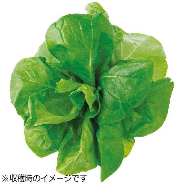 ユーイング UING 水耕栽培種子 サラダ菜 「GreenFarm」 UH-LA06