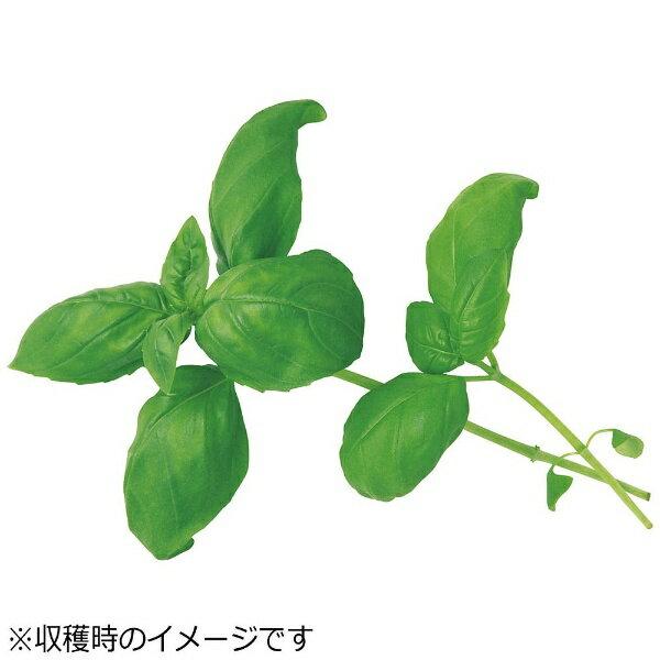 ユーイング UING 水耕栽培種子 スイートバジル 「GreenFarm」 UH-HD03