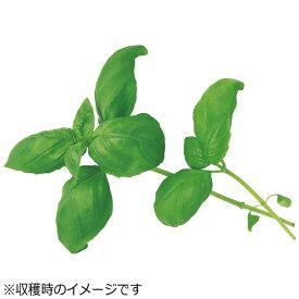 ユーイング UING 水耕栽培種子 スイートバジル 「GreenFarm」 UH-HD03[UHHD03]