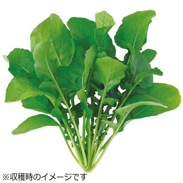 ユーイング UING 水耕栽培種子 ルッコラ 「GreenFarm」 UH-BC02