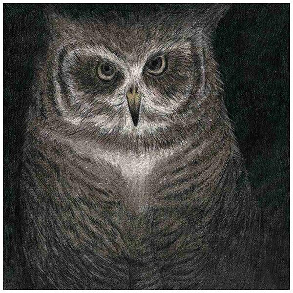 ユニバーサルミュージック 小沢健二とSEKAI NO OWARI/フクロウの声が聞こえる 完全生産限定盤 【CD】