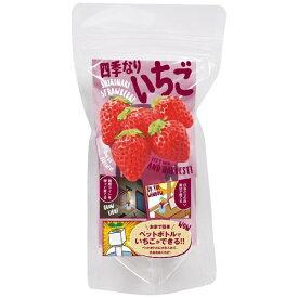 はせがわさとう HASEGAWA SATO グリーントイ イチゴ