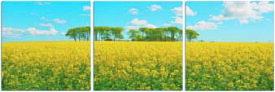 アートフレーム ND Concept Frame 3枚set 菜の花畑 ind-60545 絵画 壁掛け おしゃれ 送料無料 あす楽